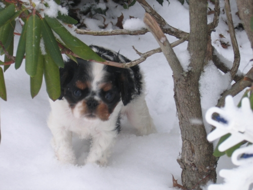 Lilah in her first snow