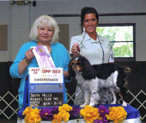 Griffin winning best of opposite in sweeps under judge Joyce M. Davis at our club show in June