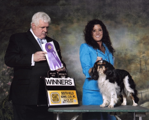 Major win at The English Toy Spaniel Club of Western PA Specialty show in Morgantown, WV
