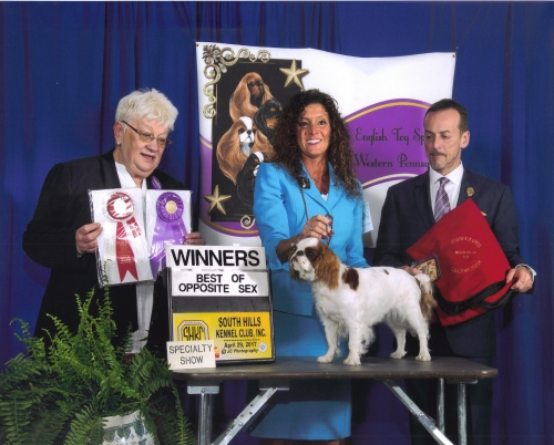Natalie's newest win at the English Toy Spaniel Club of Western Pennsylvania specialty show. Her win was under breed ju